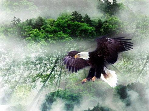 感悟《鹰的重生》蜕变,获得新生